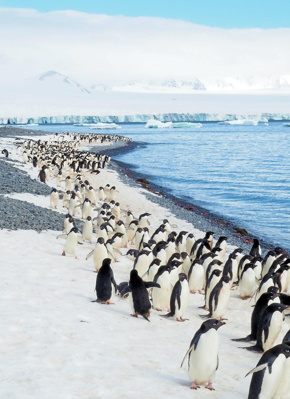penguins on white sand beach during daytime