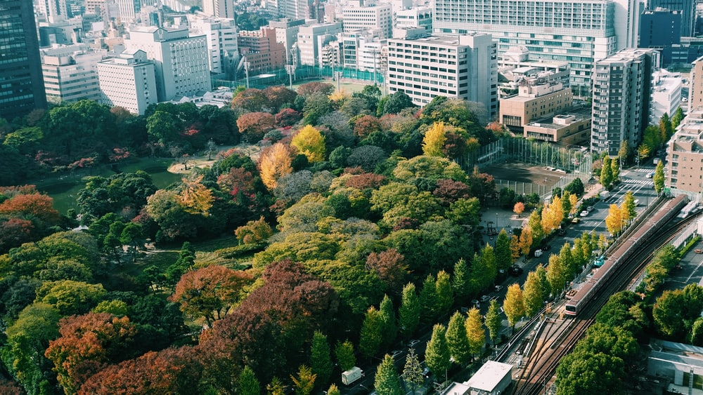 green and brown trees near city buildings during daytime