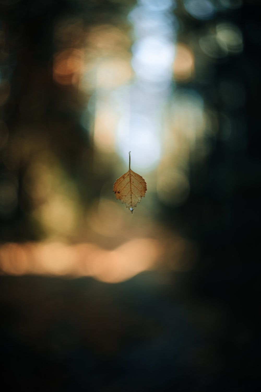 brown heart pendant in bokeh photography