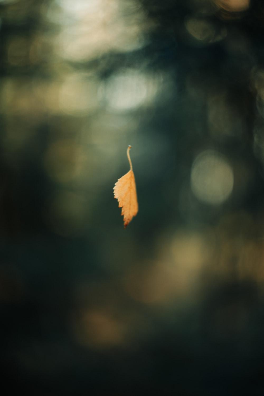 brown leaf in tilt shift lens