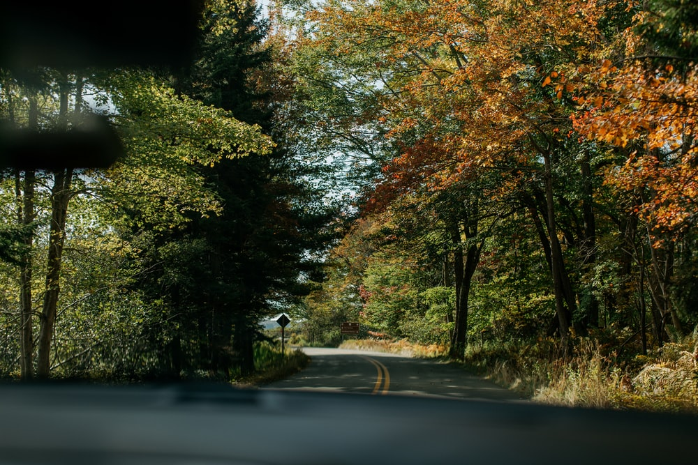 person riding bicycle on road between trees during daytime
