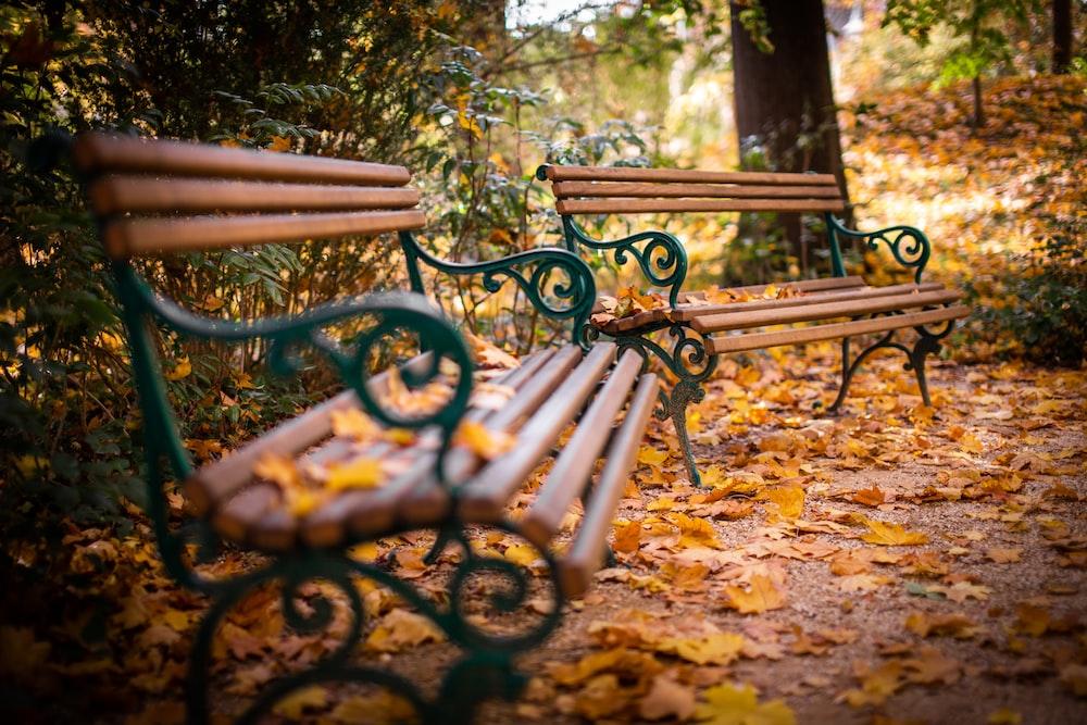 black metal bench on brown leaves