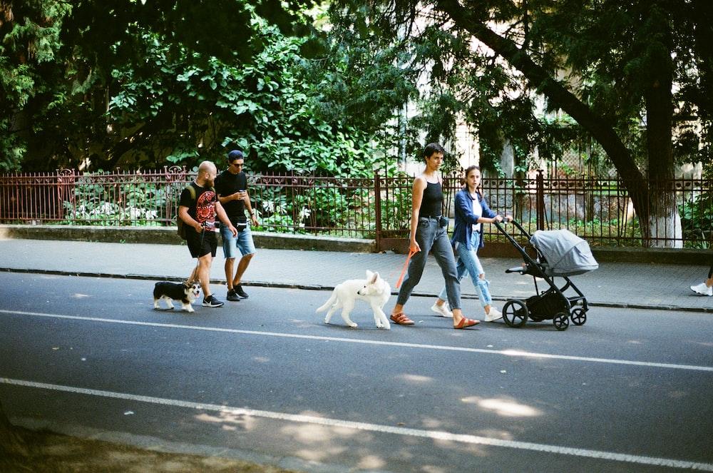 people walking on sidewalk with white dog during daytime