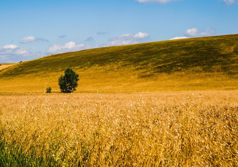 brown grass field under blue sky during daytime