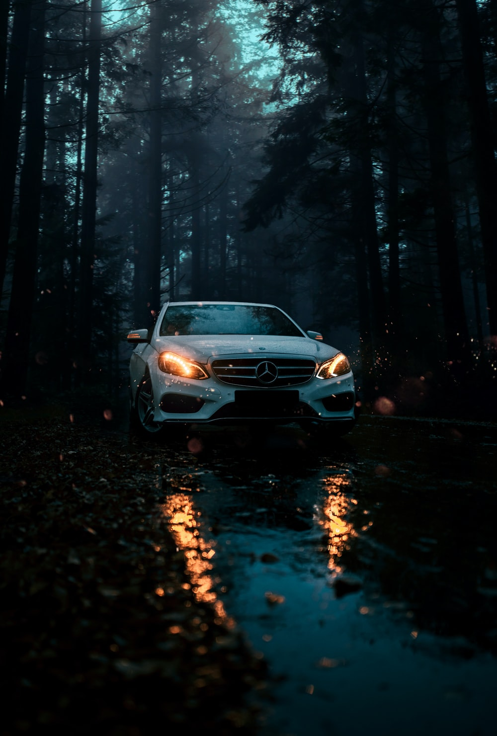 white car on road in between trees during night time