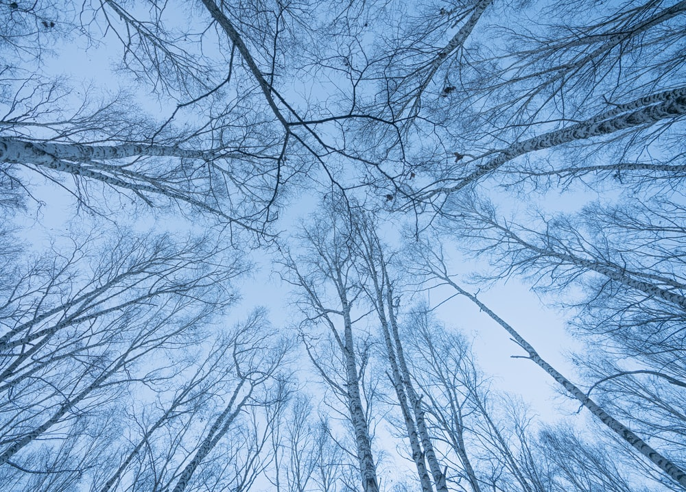 brown bare trees under blue sky during daytime
