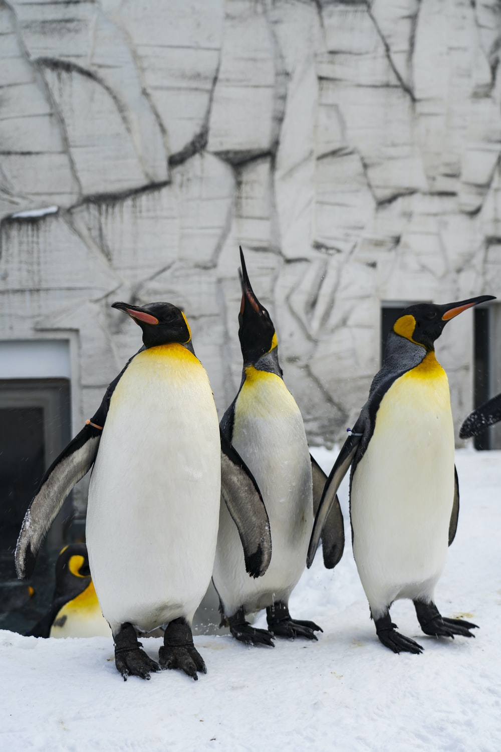 penguins on gray concrete wall