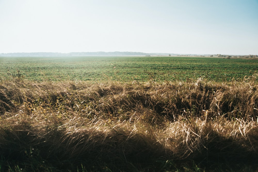 brown grass field under white sky during daytime