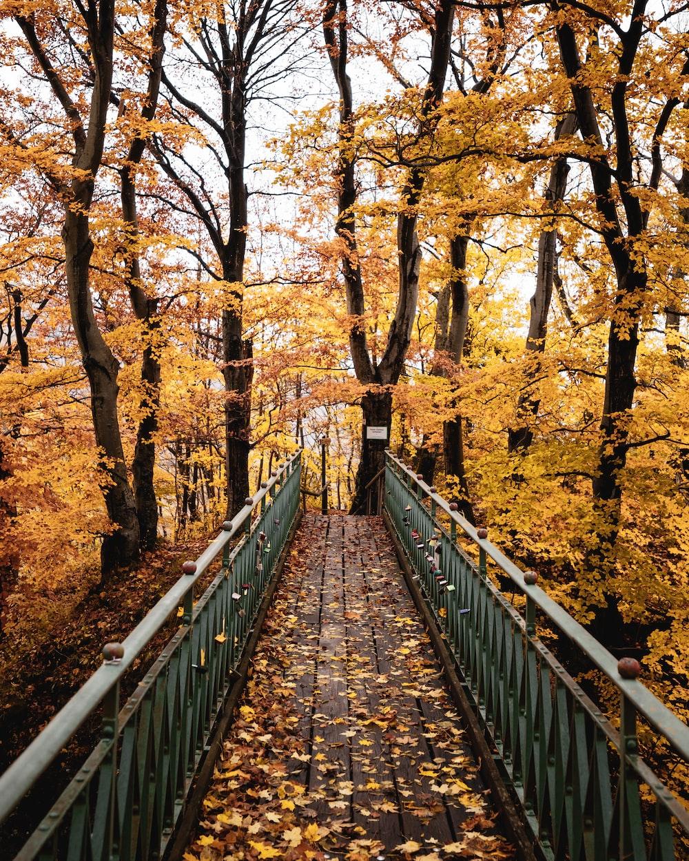 brown wooden bridge in between brown trees during daytime