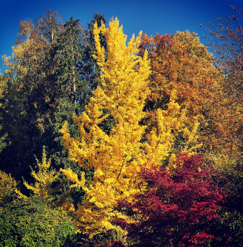 yellow and green trees under blue sky during daytime