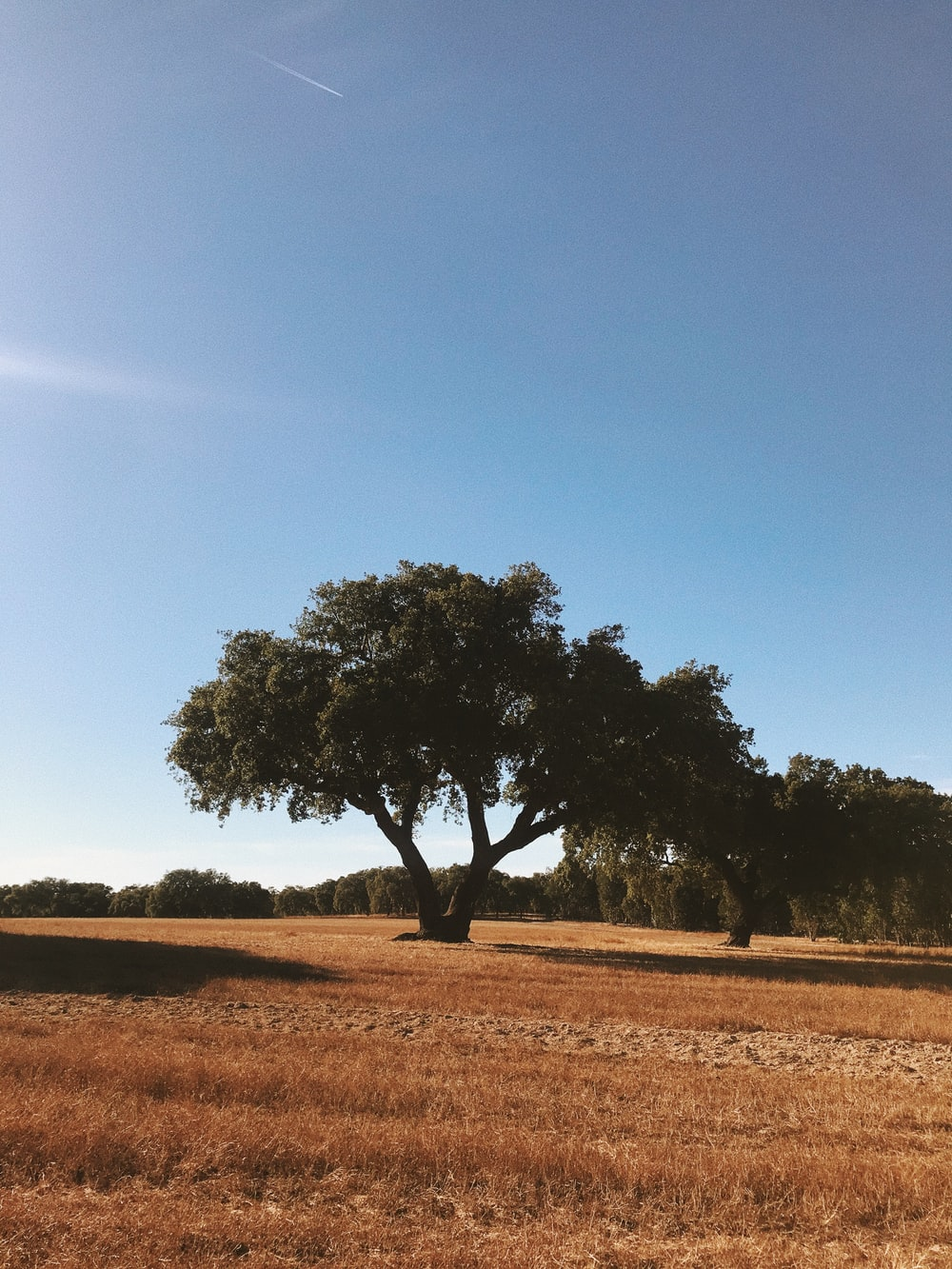 green tree on brown field under blue sky during daytime