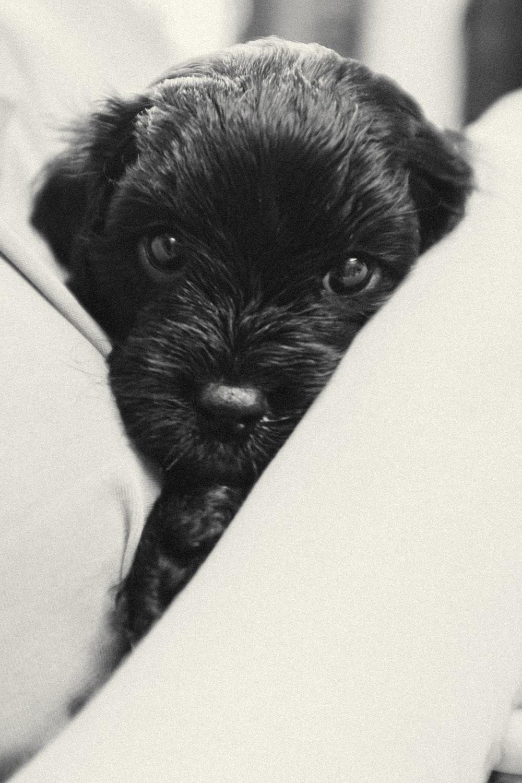 black long coat small dog