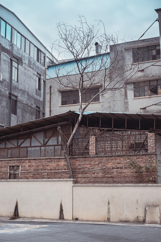 bare tree near brown brick building