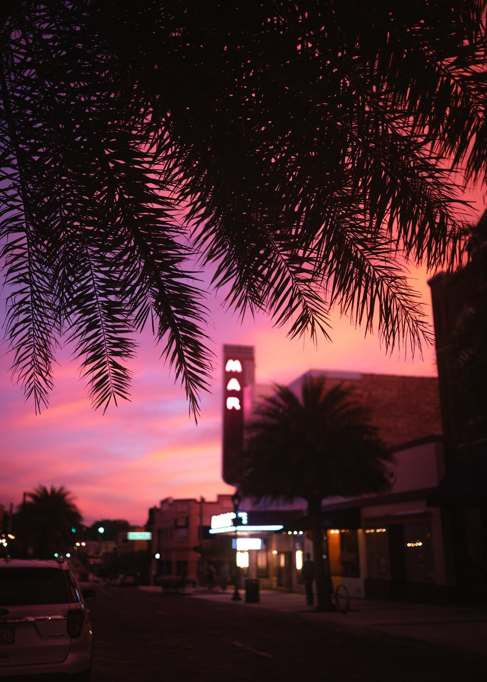 palm tree near building during sunset
