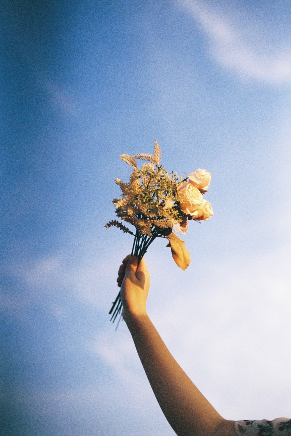 person holding yellow flower under blue sky during daytime
