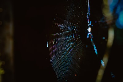 spider web in close up photography spectrum zoom background