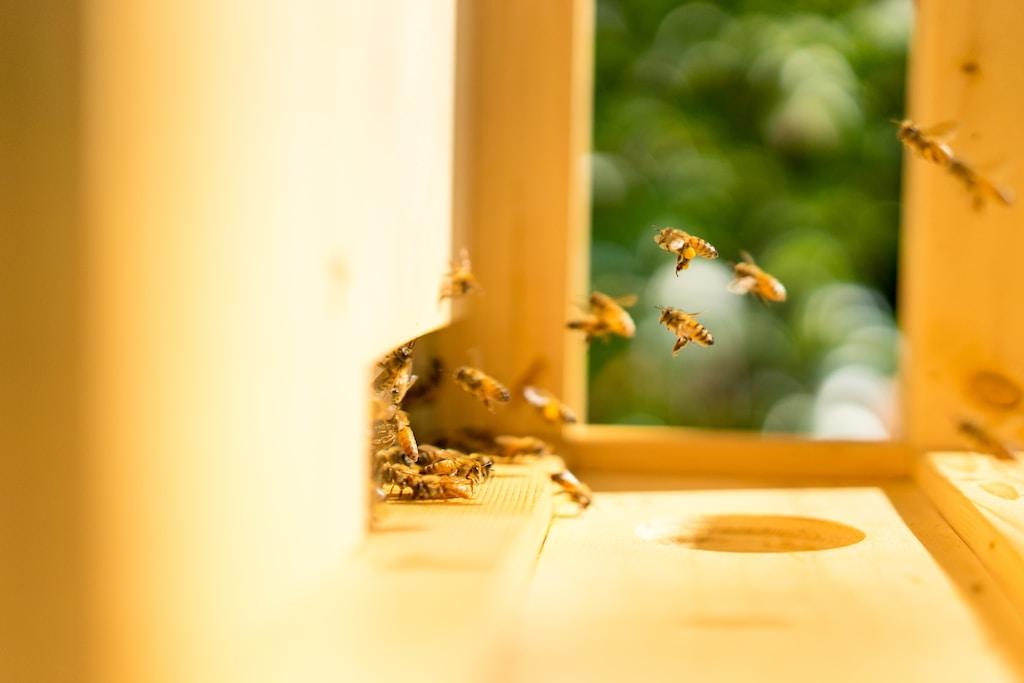 MeliBio miele senza api