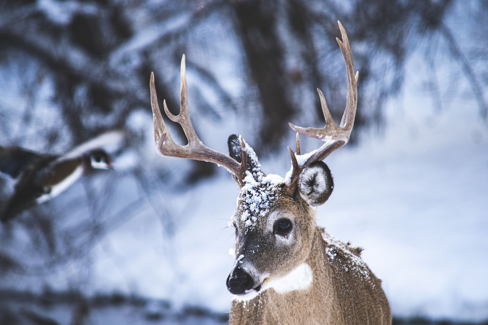 brown deer on snow covered ground during daytime