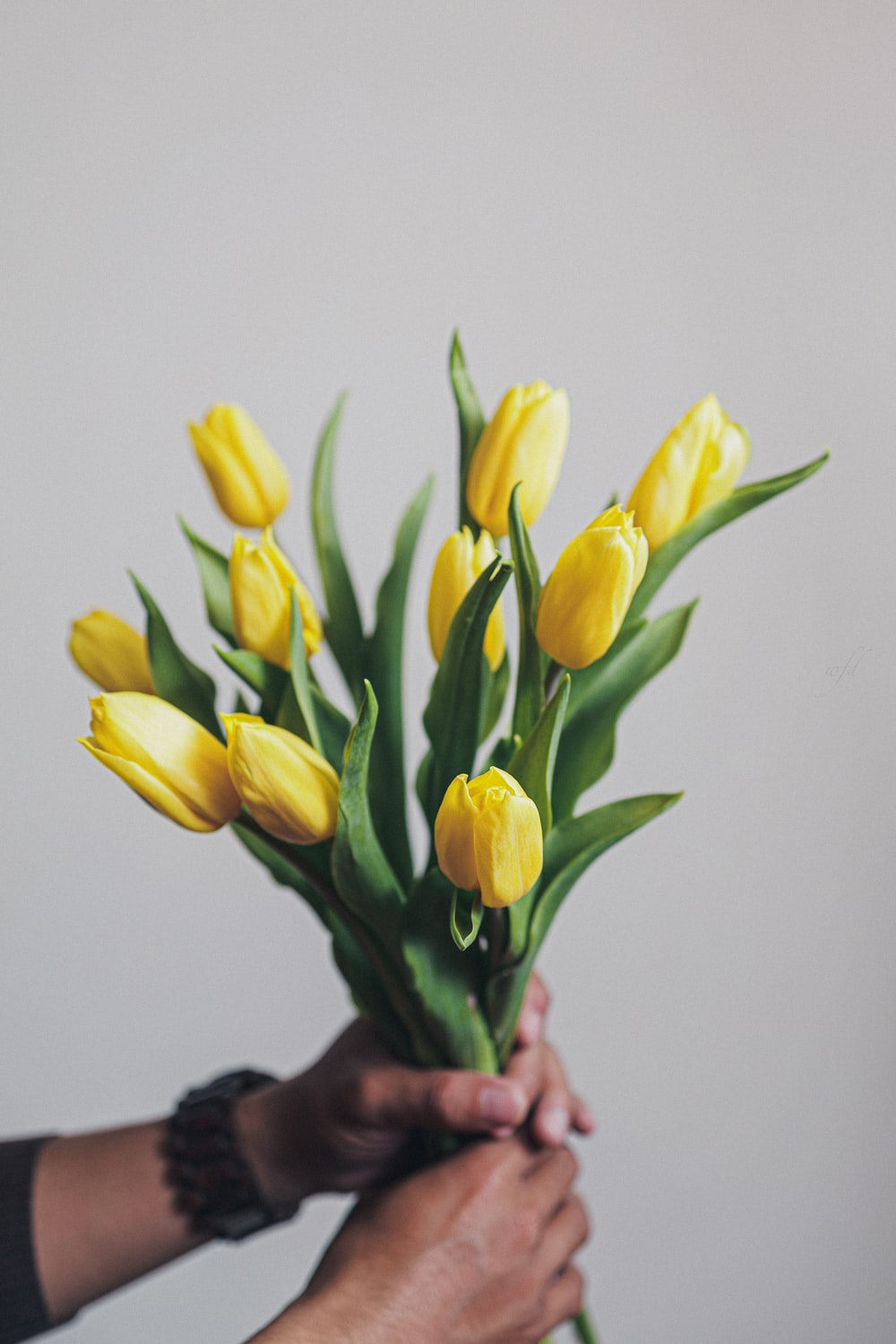 yellow tulips in white room