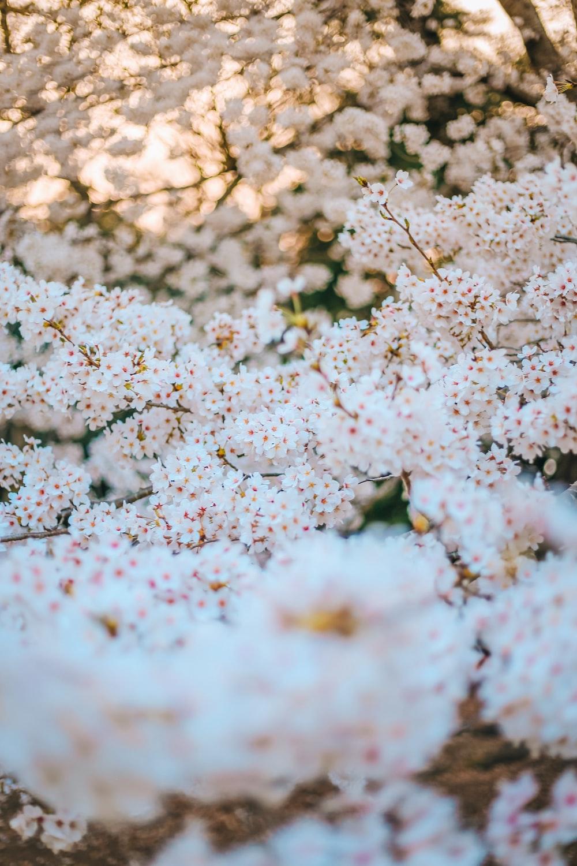 white flowers on white sand during daytime