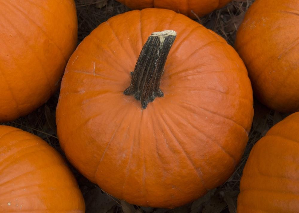 orange pumpkin on brown dried leaves