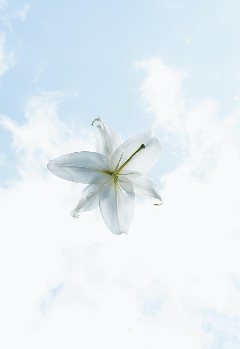 white flower under white clouds during daytime