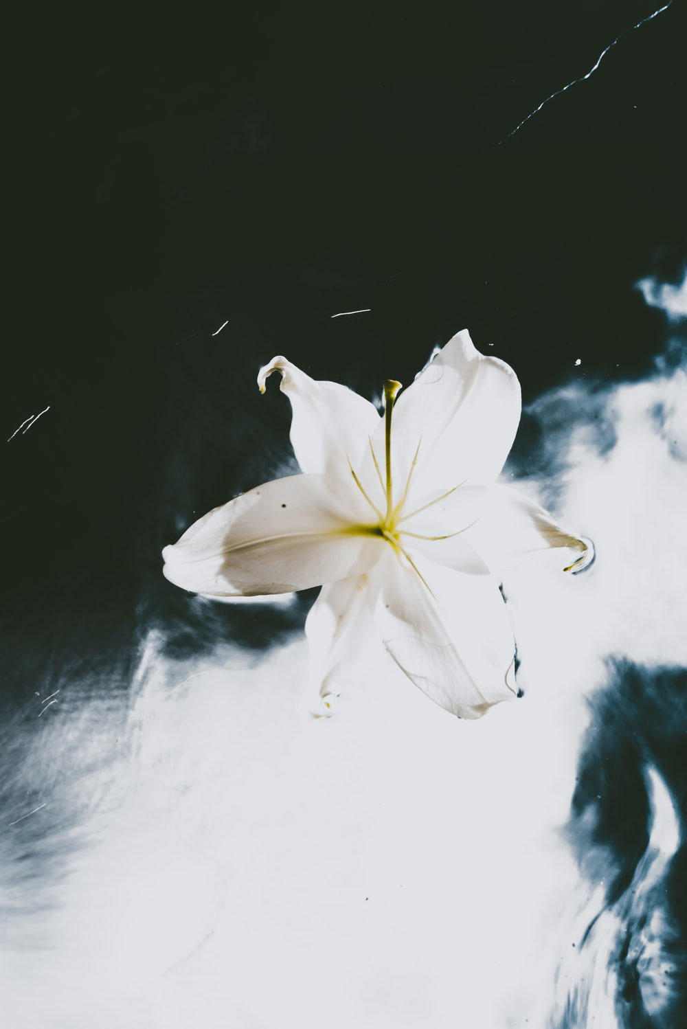 white and yellow flower on black surface