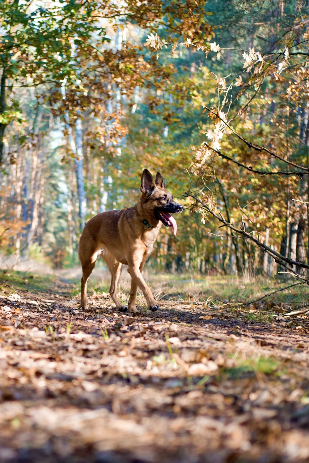 brown short coated dog on brown grass field during daytime