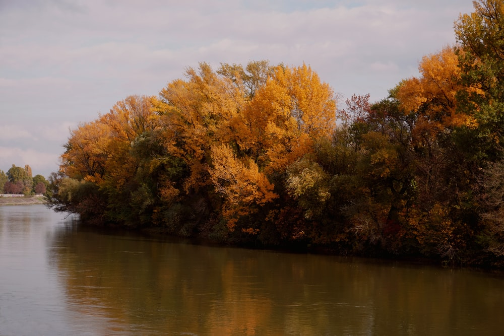 brown and green trees beside river during daytime