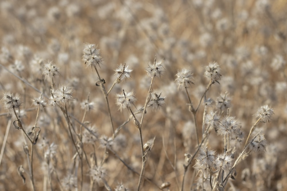 brown and white flower field during daytime