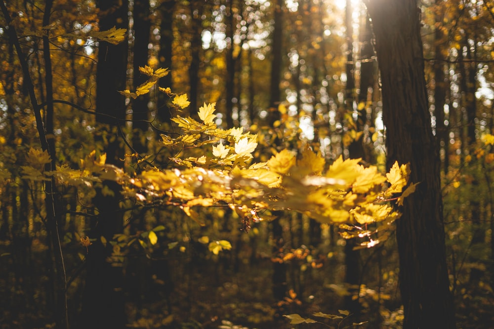 yellow leaves on forest during daytime
