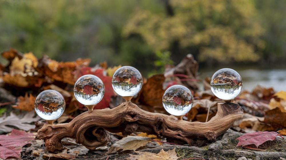 clear glass ball on brown tree log
