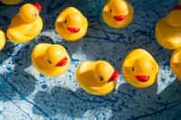 Rubber Ducks vent stories