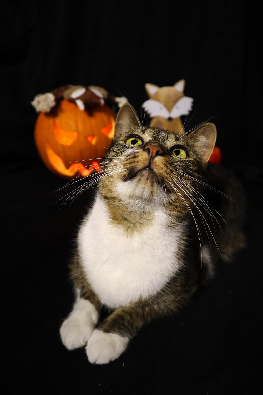white and black cat on orange pumpkin
