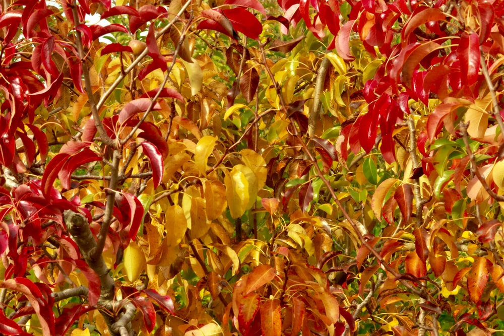 red and yellow leaves during daytime