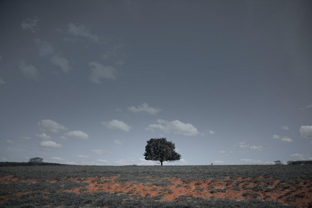 green tree on brown field under gray sky