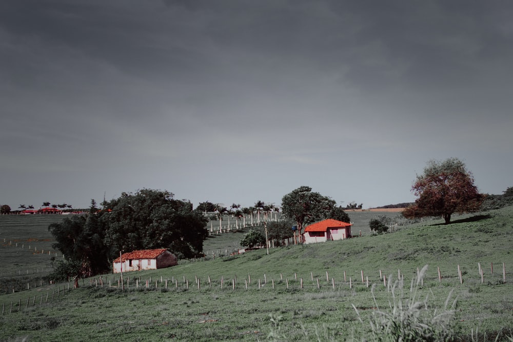 green grass field near houses under gray sky
