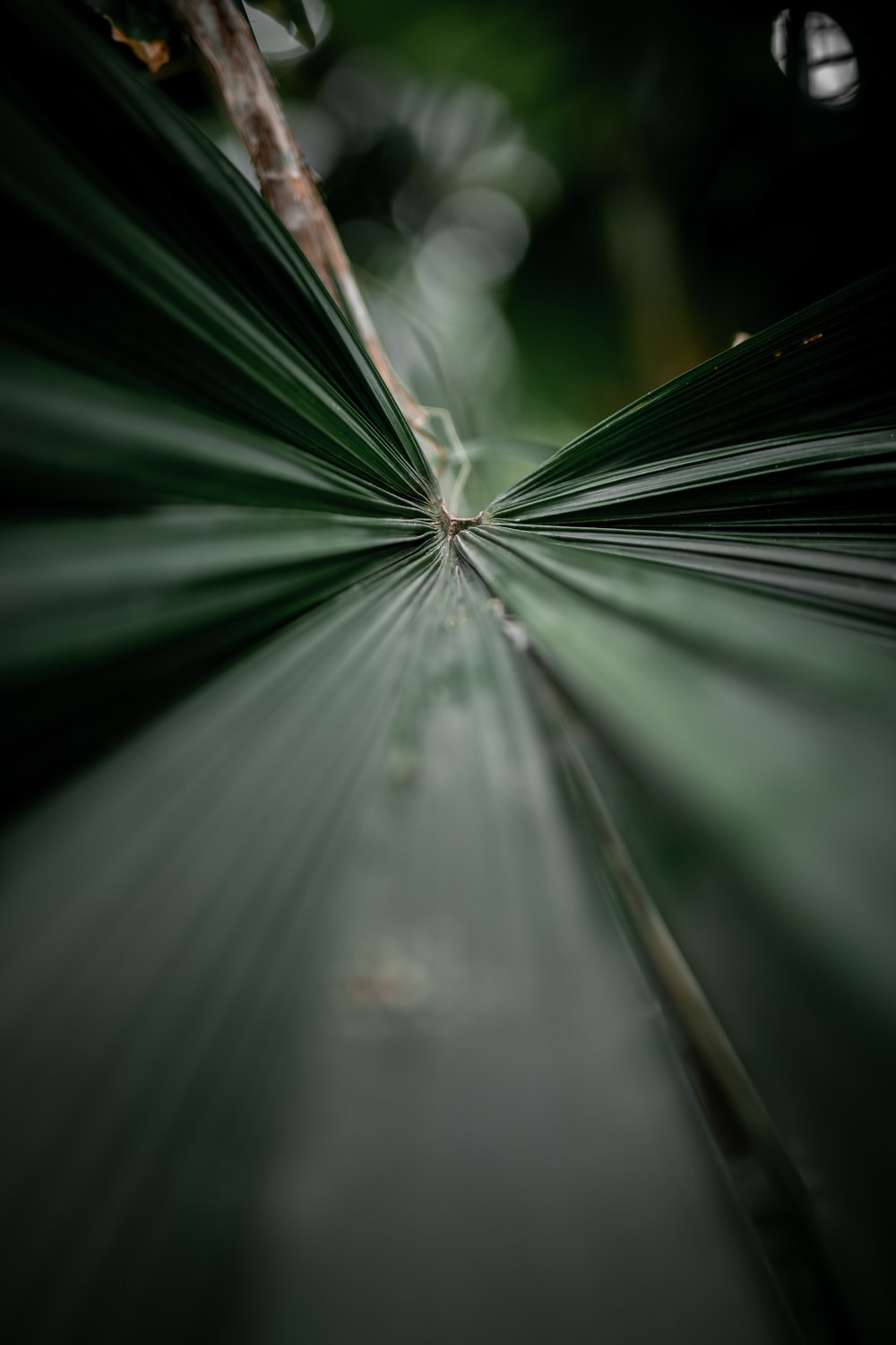 green leaf plant with sun rays