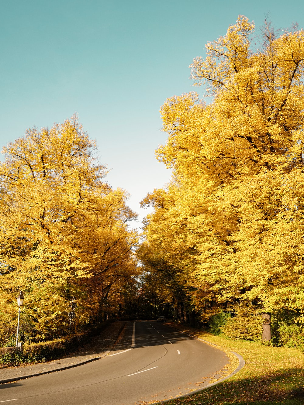 green and yellow trees beside gray concrete road during daytime