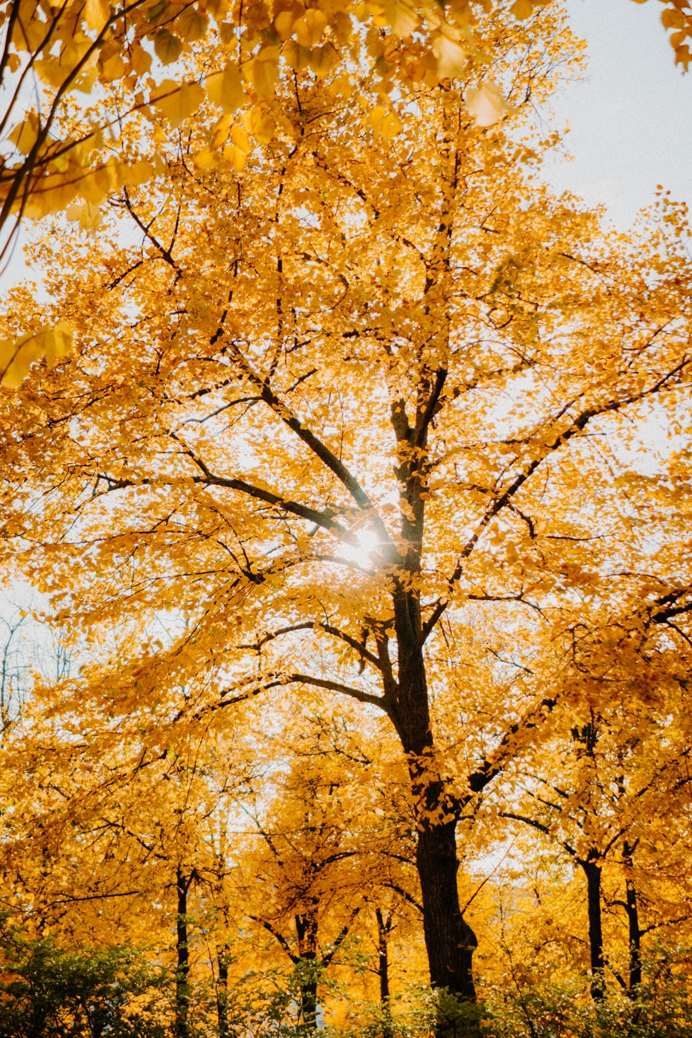yellow leaf trees under blue sky during daytime