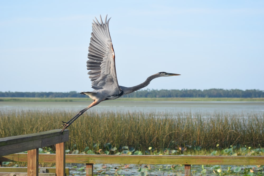 grey heron perched on brown wooden fence during daytime