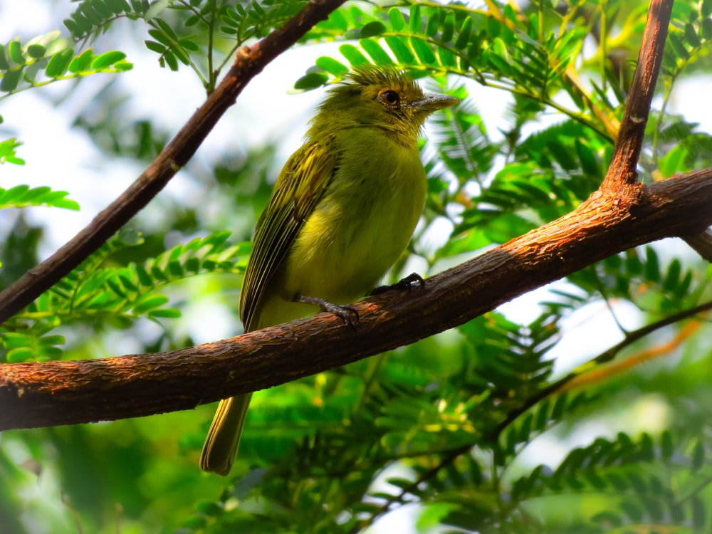 yellow bird on brown tree branch during daytime