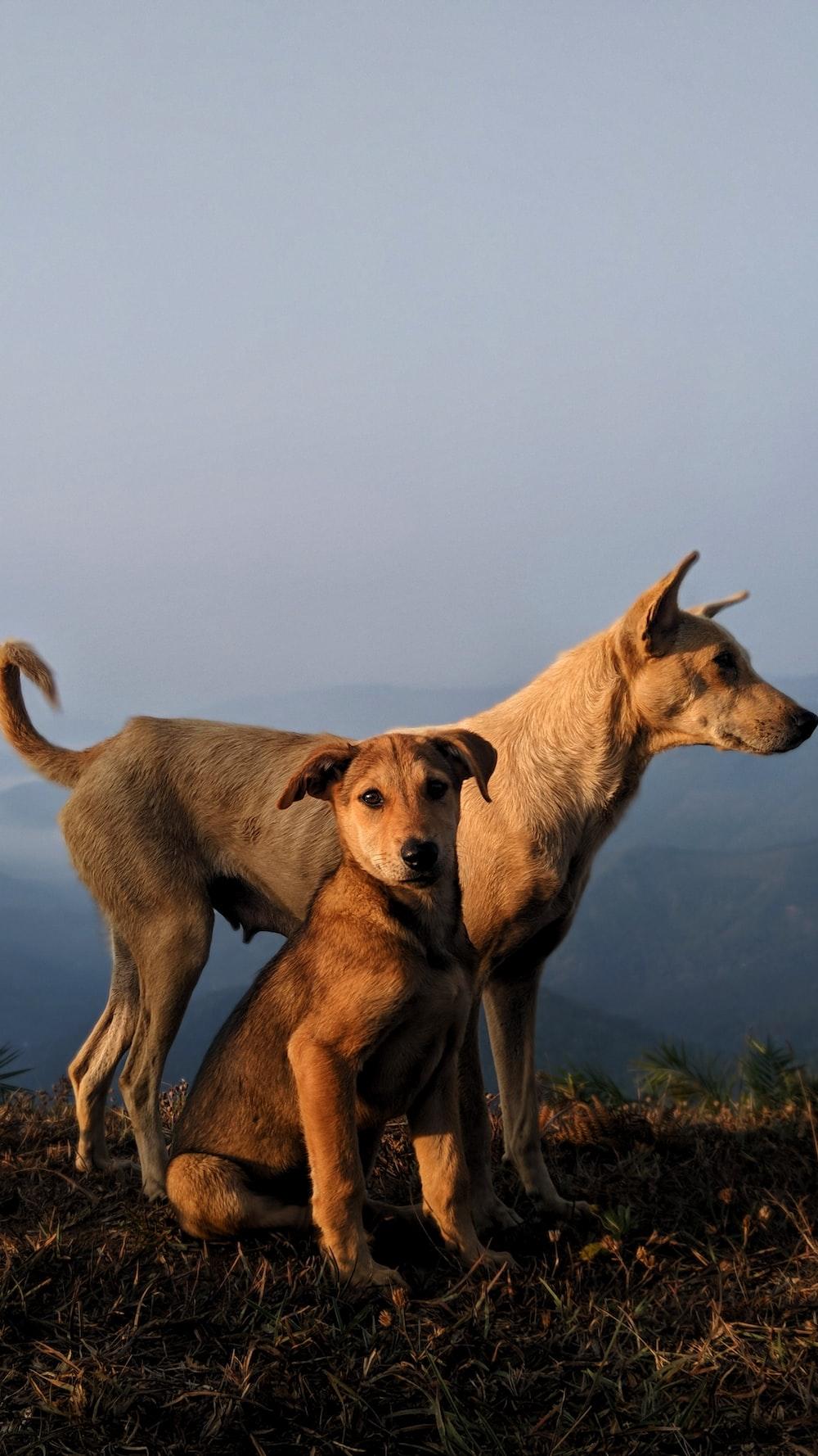 brown short coat medium dog on green grass field during daytime