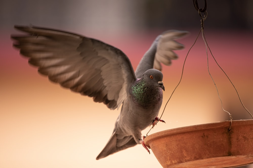 green and gray bird flying