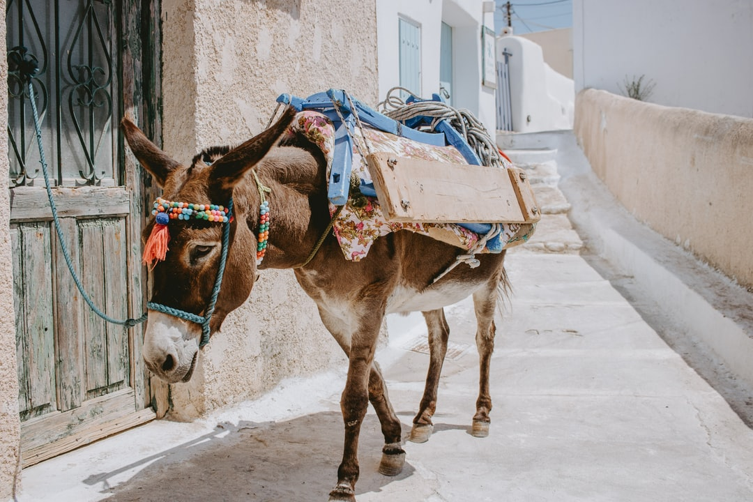 Brown Horse With White and Red Carriage On the Street - unsplash