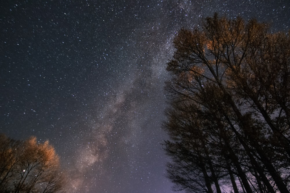 bare trees under starry night