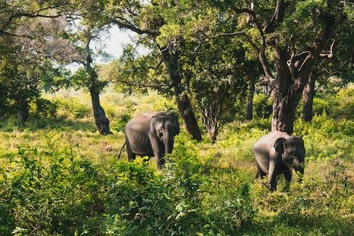 Wildlife - Yala National Park