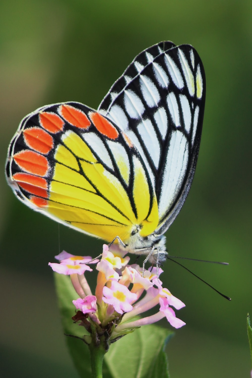 tiger swallowtail butterfly perched on purple flower in close up photography during daytime