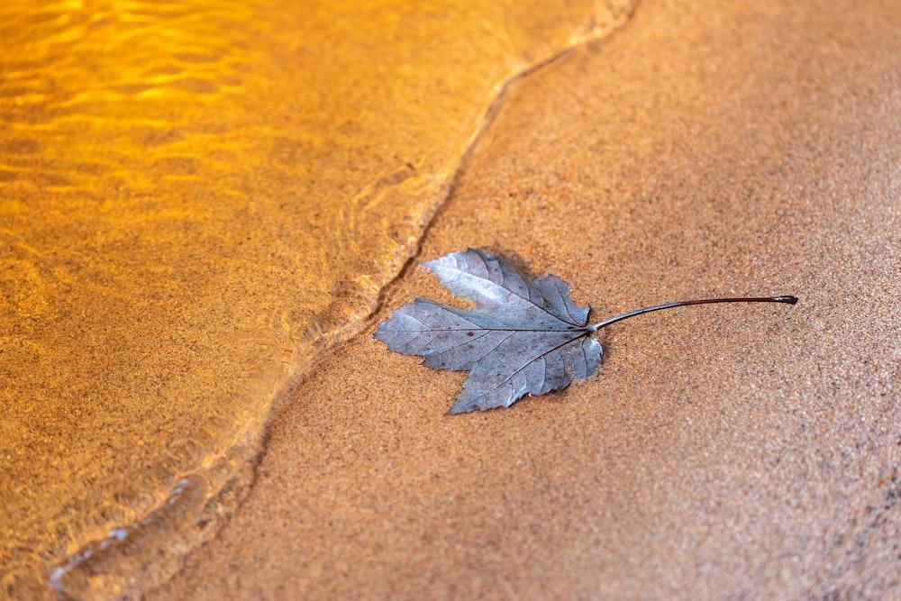 brown leaf on brown sand