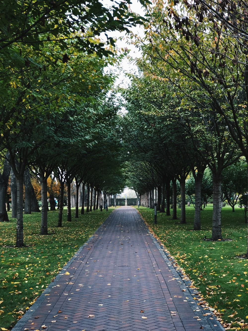 gray concrete pathway between green grass and trees during daytime